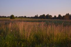 Beautiful Sunlit meadow. Summer evening. Outdoor view. Park, forest, trees. Art photo for poster print stock photography