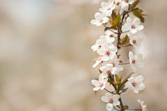 Beautiful sunlit spring flowers. With bokeh copy space Stock Image