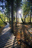 Beautiful sunny autumn day near Plitvice Lakes Royalty Free Stock Photos