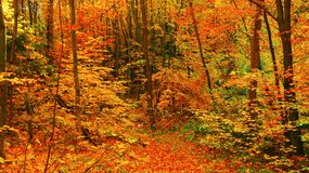 Beautiful sunny day in the autumn golden forest stock photos