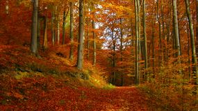 Beautiful sunny day in the autumn golden forest royalty free stock photo
