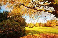 Beautiful, sunny autumn in the park Stock Images