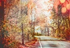 Beautiful sunny autumn road with red fall foliage trees Royalty Free Stock Image