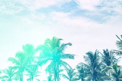 Beautiful sunny beach. View of nice tropical beach with palms royalty free stock image