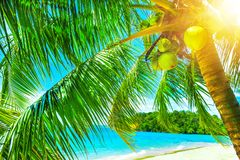 Beautiful sunny beach. View of nice tropical beach with palms ar Stock Photos