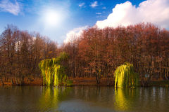Beautiful sunny day in autumn park Royalty Free Stock Image