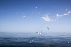 Beautiful sunny day with blue sky over the sea. Royalty Free Stock Photo