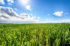 Beautiful sunny day in Israel Royalty Free Stock Photography