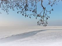 Curonian spit and tree branches in winter, Lithuania royalty free stock images