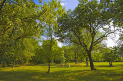 Beautiful sunny day in the park Royalty Free Stock Photo