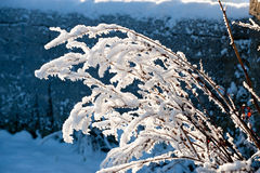 Beautiful sunny day and tree cover with snow Stock Images