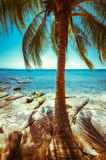 Beautiful sunny day at tropical beach with palm tree Stock Photos