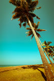 Beautiful sunny day at tropical beach Stock Photography