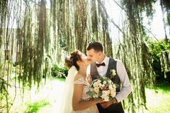 Beautiful sunny day. Wedding couple posing on the background of nature royalty free stock photography