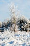 Beautiful sunny day in the winter on the river Royalty Free Stock Photo