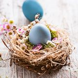 Beautiful, sunny easter greeting card - with blue colored eggs and a natural nest Royalty Free Stock Image