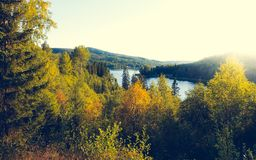 Beautiful sunny evening in forest mountain landscap stock images