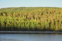 Beautiful sunny evening in forest mountain landscape. Swedish fl royalty free stock image