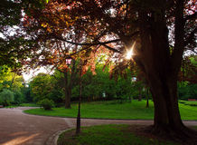 Beautiful sunny evening in green city park Royalty Free Stock Photography