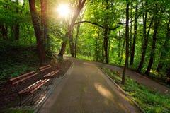 Beautiful sunny evening in green city park Royalty Free Stock Photo