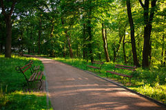 Beautiful sunny evening in green city park Royalty Free Stock Image