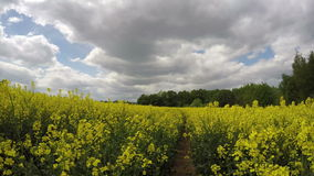 Beautiful sunny farmland rapeseed yellow field and clouds motion. Timelapse 4K stock footage