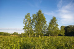Beautiful sunny and foggy morning on a summer meadow Stock Images