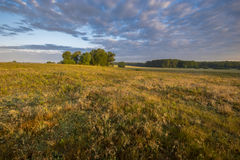 Beautiful sunny and foggy morning on a summer meadow Stock Photos