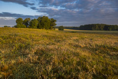 Beautiful sunny and foggy morning on a summer meadow Stock Photography