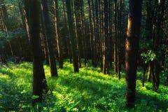 Beautiful sunny forest. On summer stock photos