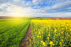 Beautiful sunny landscape Royalty Free Stock Image