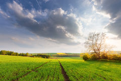 Beautiful sunny landscape Royalty Free Stock Photography