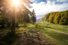 Beautiful Sunny Landscape Of A Small Clearing. In The Foreground Royalty Free Stock Photography