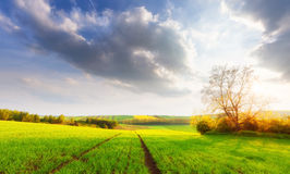 Beautiful sunny landscape Royalty Free Stock Images