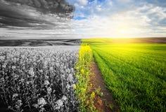 Beautiful sunny and monochrome landscape Royalty Free Stock Image