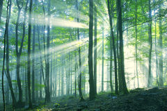 Beautiful sunny morning forest Stock Photos