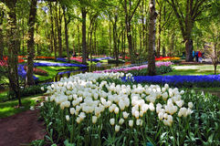 Beautiful sunny morning at the Keukenhof Gardens stock photography