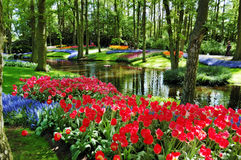 Beautiful sunny morning at the Keukenhof Gardens. Colorful flowers and blossom in dutch spring garden Keukenhof (Lisse, Netherlands stock photo
