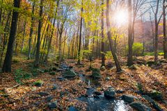Beautiful sunny scenery in autumn forest. Lots of foliage on the ground around stones and brook royalty free stock image