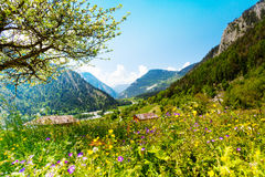 Beautiful sunny scenery near Alps Royalty Free Stock Images