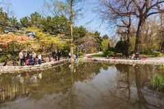 Beautiful sunny spring day in japanese garden in Budapest royalty free stock photography