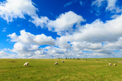 Beautiful sunny Stonehenge landscape England. Spring sunny landscape of historic Stonehenge in England. Beautiful panorama stock photos