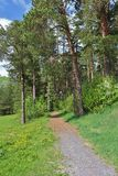 Sunlit forest path in Residensparken in Luleå Stock Images