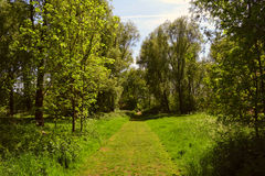 Beautiful sunny walking path in the woods / forest in spring / summer, Waltham Abbey, UK Royalty Free Stock Images
