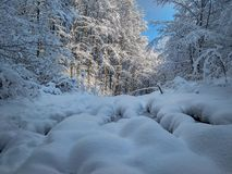 Beautiful sunny winter landscape in the forest. Winter cold day in forest without people stock image