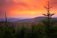 Beautiful sunrise above spruce forest. Orange and red sky during morning. Krkonose mountain, forest in the wind, misty landscape, Royalty Free Stock Photography