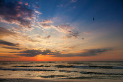 Beautiful sunrise on the beach with seagulls. Red sky stock images