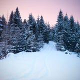 Beautiful sunrise in Carpathian mountains Royalty Free Stock Photo