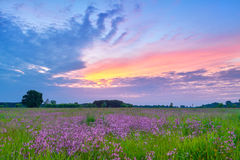 Beautiful sunrise countryside field flowers sky clouds landscape