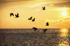 Beautiful sunrise and flying birds over the sea Stock Image